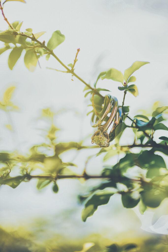 Rings in a tree